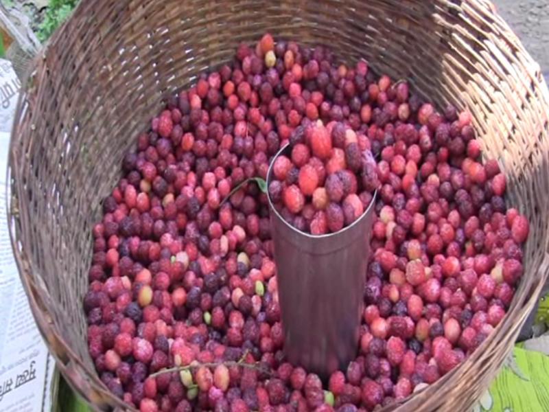 fruti kafal