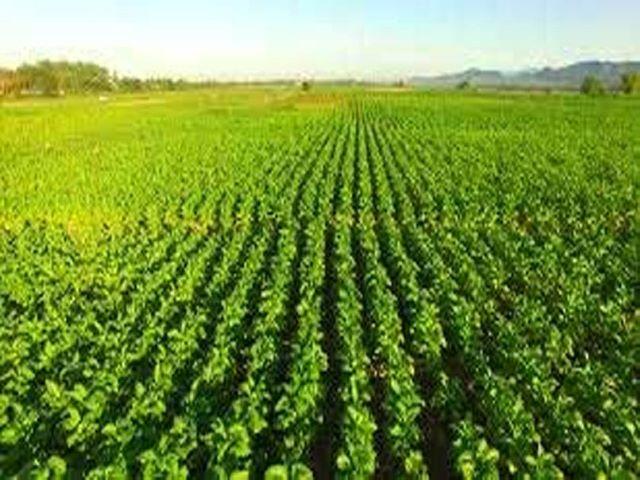 5 हजार किसानों को प्राकृतिक खेती का प्रशिक्षण, सरकार कराएगी मुफ्त दौरा
