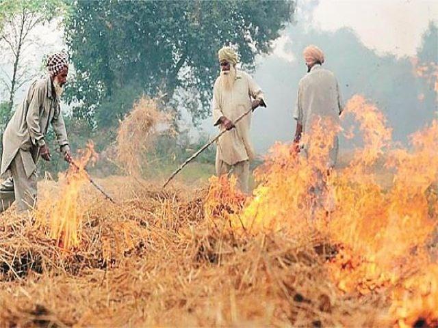 burning of crop