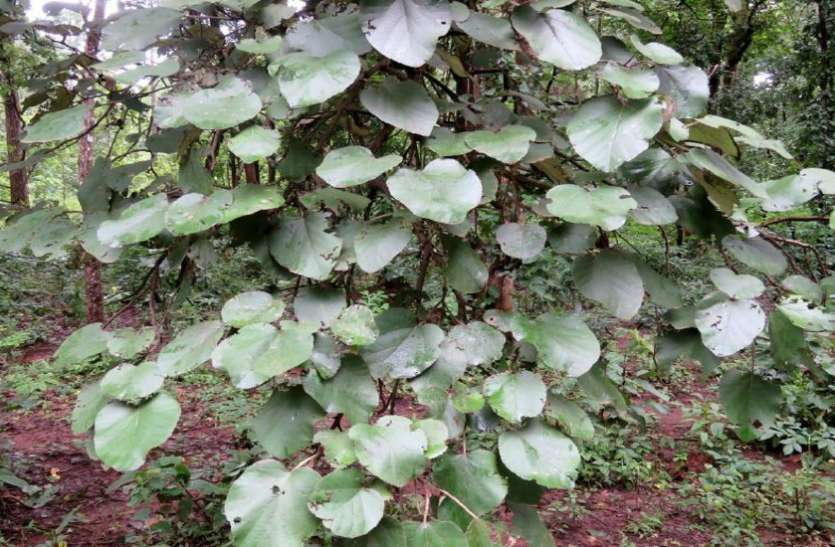 plant of tres