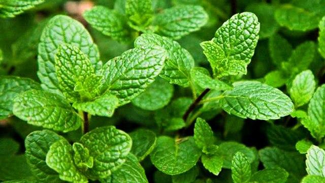 mint advantage advantage of mint
