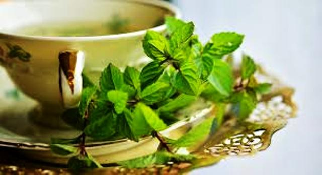 mint and human health