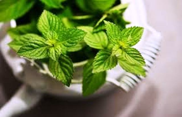 health tips and mint mint tips