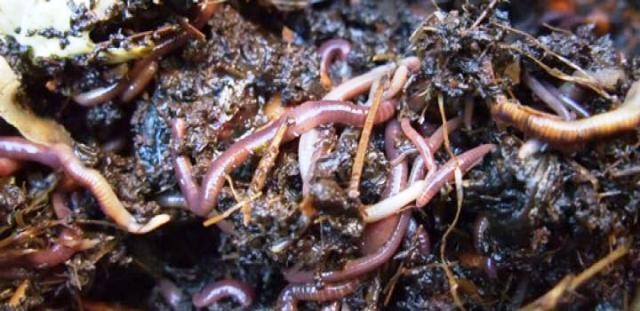 how to sell vermicompost in india