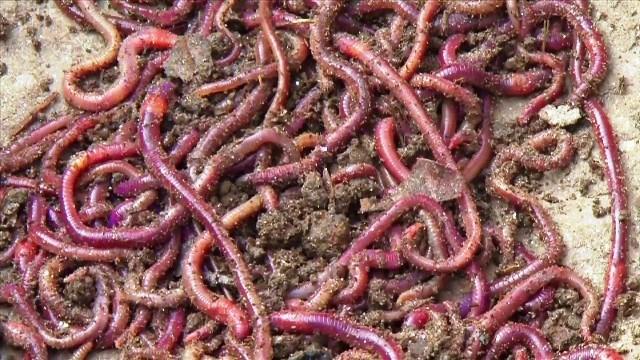 Modern farming vermicompost