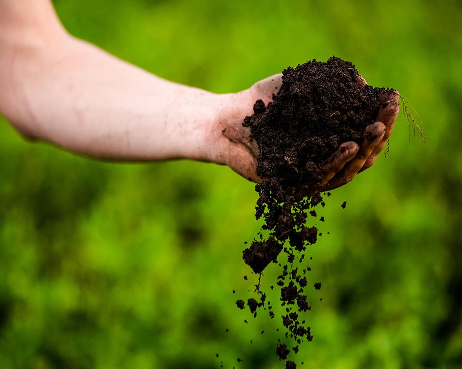Soil feryilliy