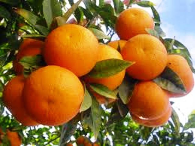 orange subsidy