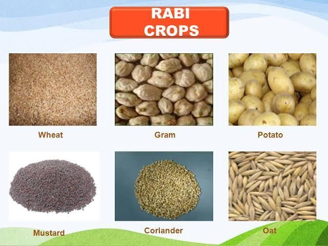 rabi crops