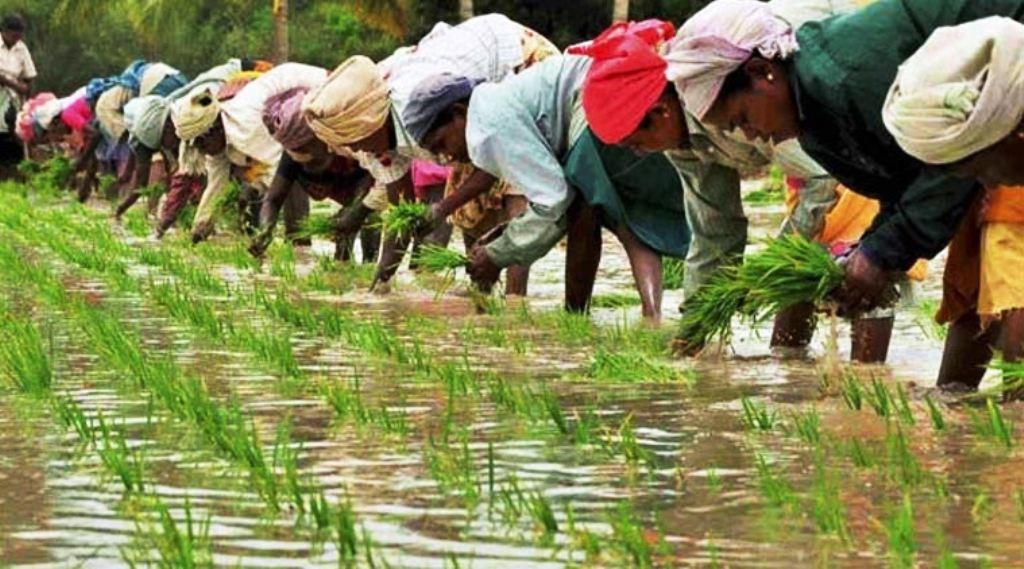 farmers solution