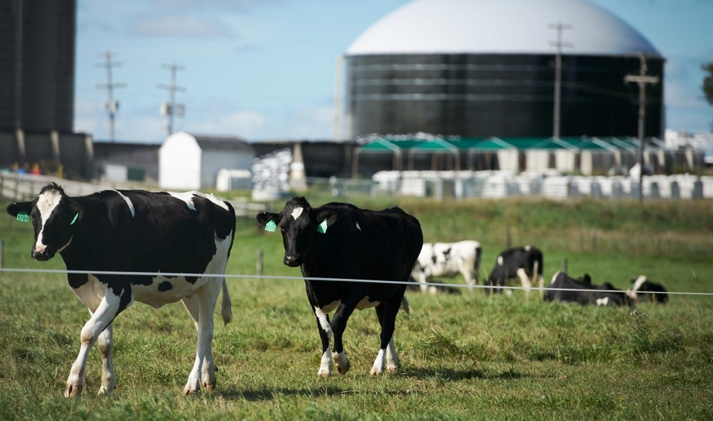 bio gas plants and cow dung