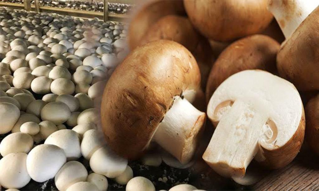 Mushroom is vegetarian or non-vegetarian