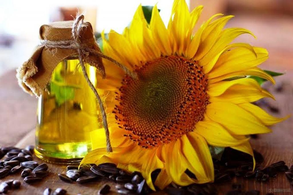 sunflower oil benefits for hair