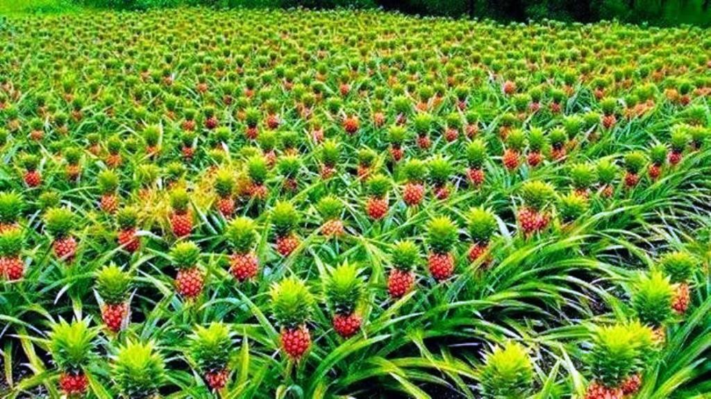organic farming and soil health