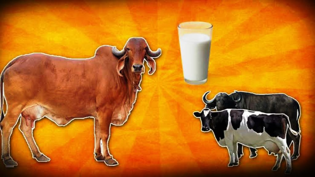 cow milk or buffalo milk differnces