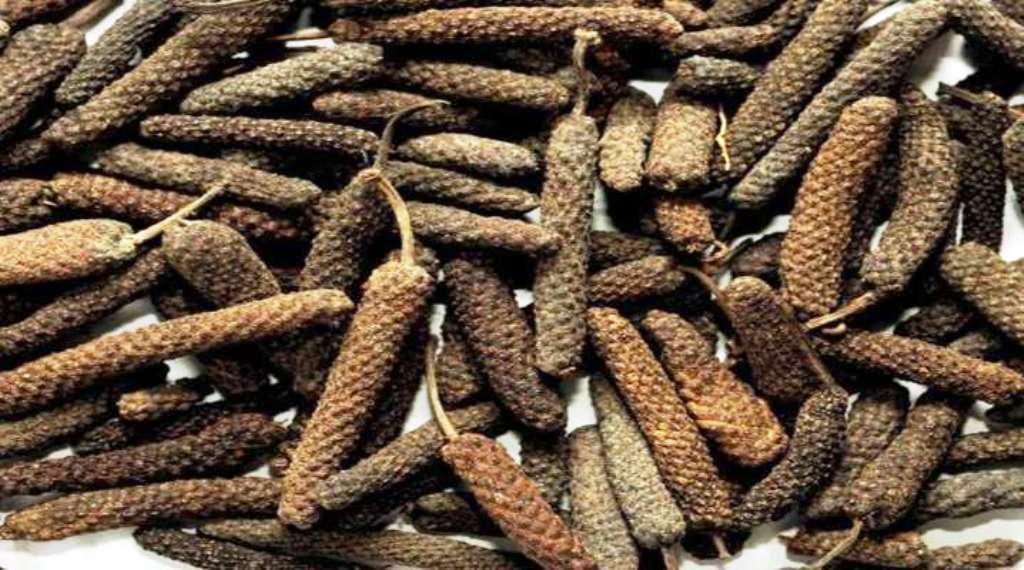 Scientific cultivation of Pippali