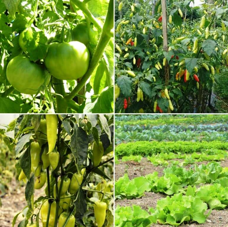 Advanced way of farming