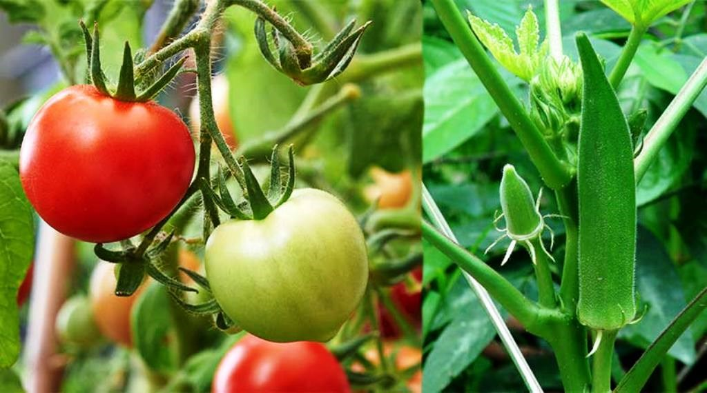Agricultural and horticultural work