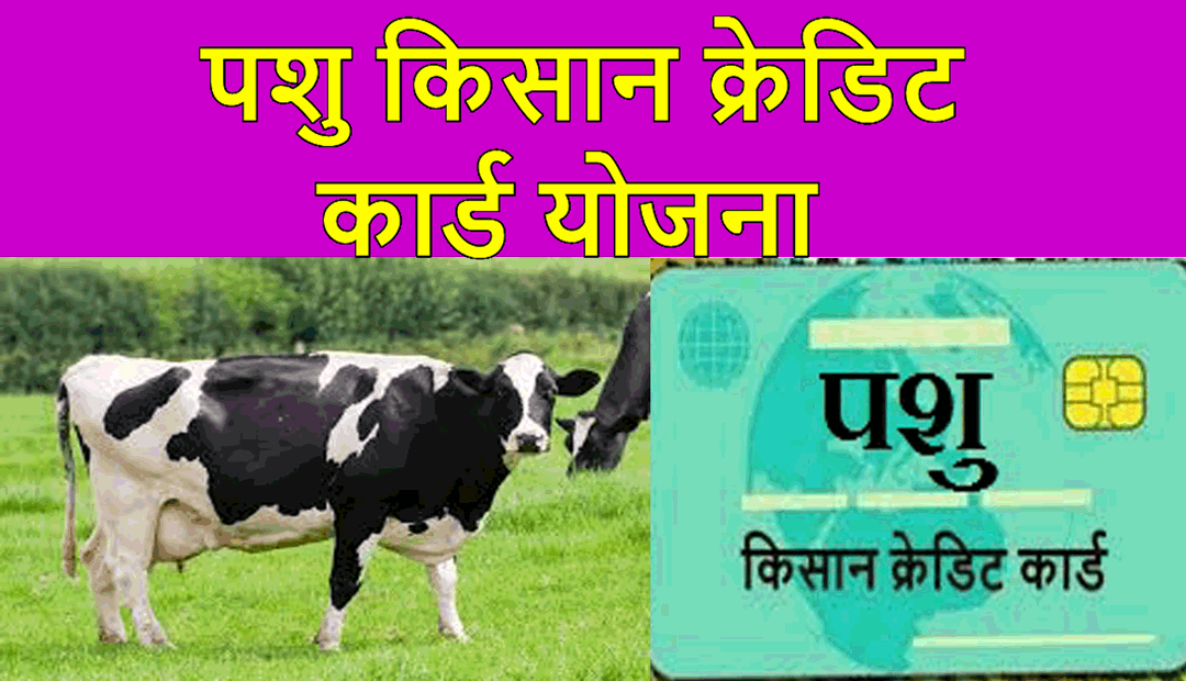 cattle credit card
