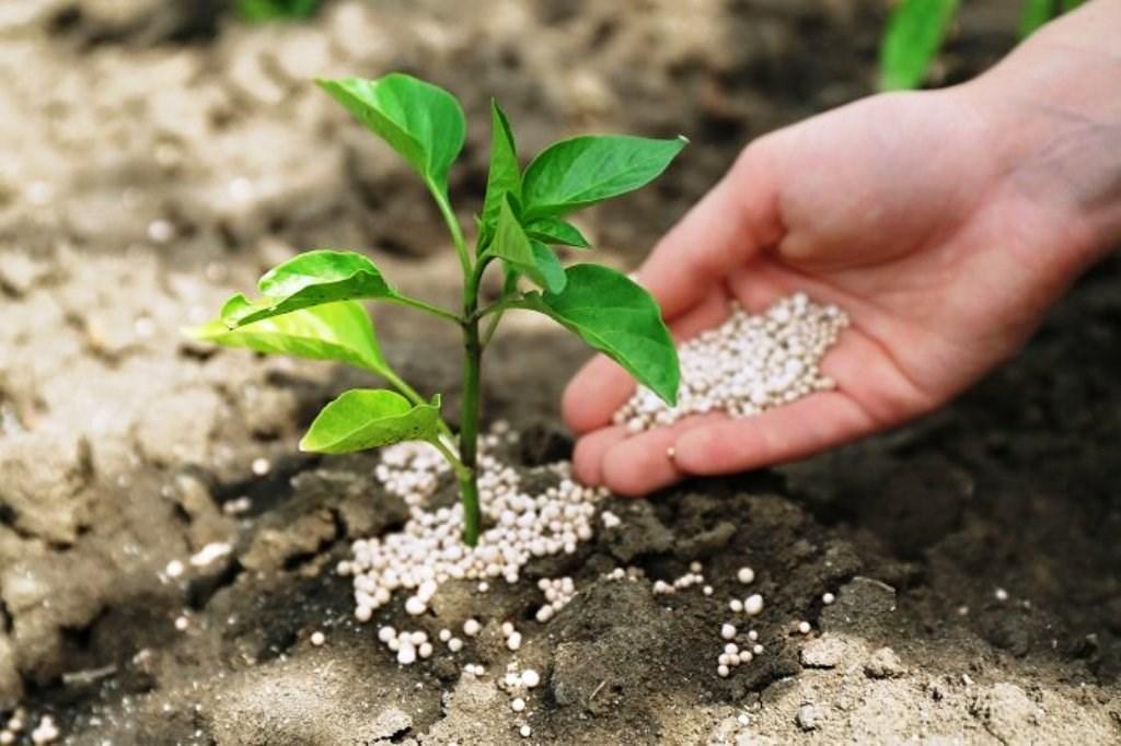 chemical fertilizers in hindi
