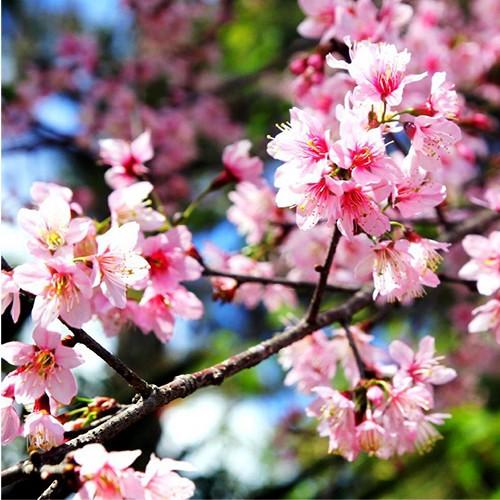 padam flowers