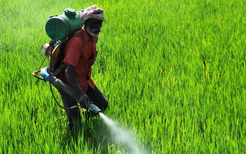 Insecticide for crop