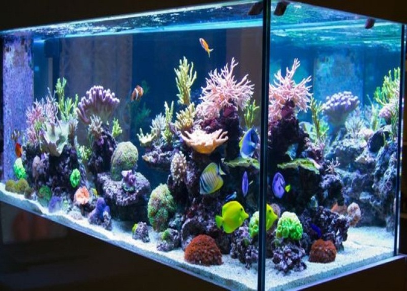 Fisheries in the Aquarium