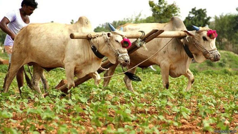 Chief Minister Farmer Accident Welfare Scheme