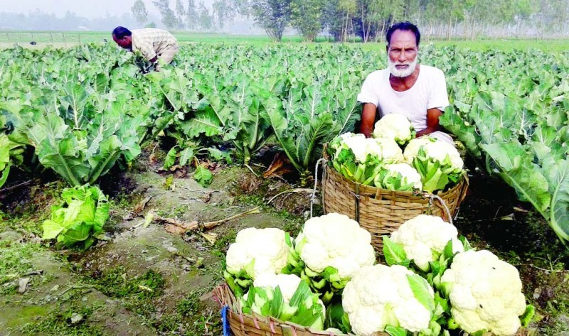 Vegetable production