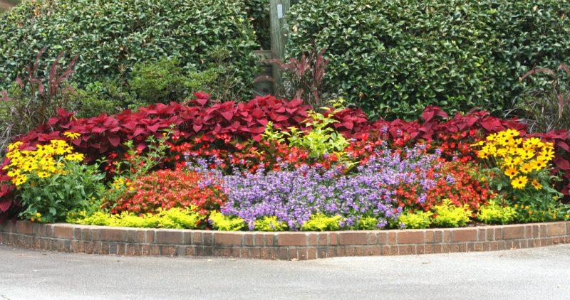 Summer floriculture