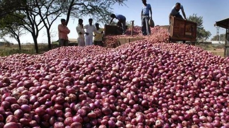 Onion Prices Fall Down in Market
