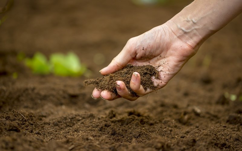 Fertility of soil