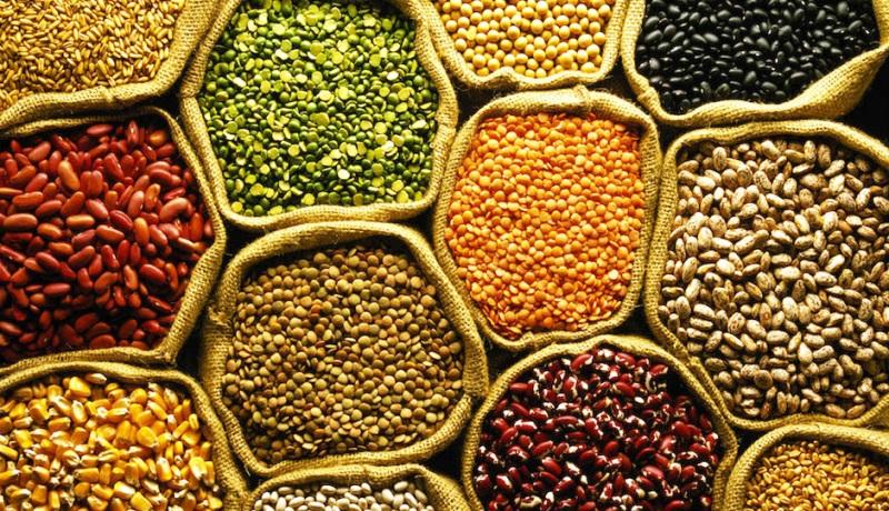 Pulses crop