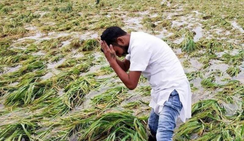 Compensation for kharif crop