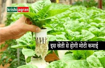 बिना मिट्टी की खेती से कमाएं लाखों का मुनाफ़ा, जानें कैसे