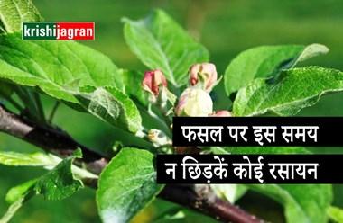 बागवान  ध्यान दें, पेड़ों में फूल आने के दौरान रसायन का उपयोग है घातक