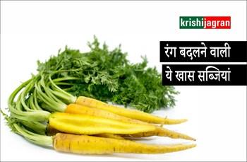 रंग बदलने वाली ये खास सब्जियां, स्वास्थ्य के लिए भी हैं लाभकारी