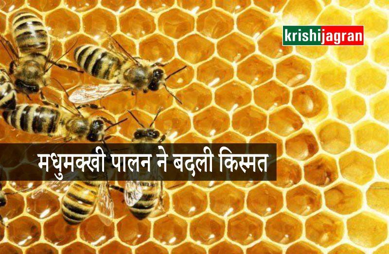 मधुमक्खी पालन ने बदली इस किसान की तकदीर, जानिए कैसे