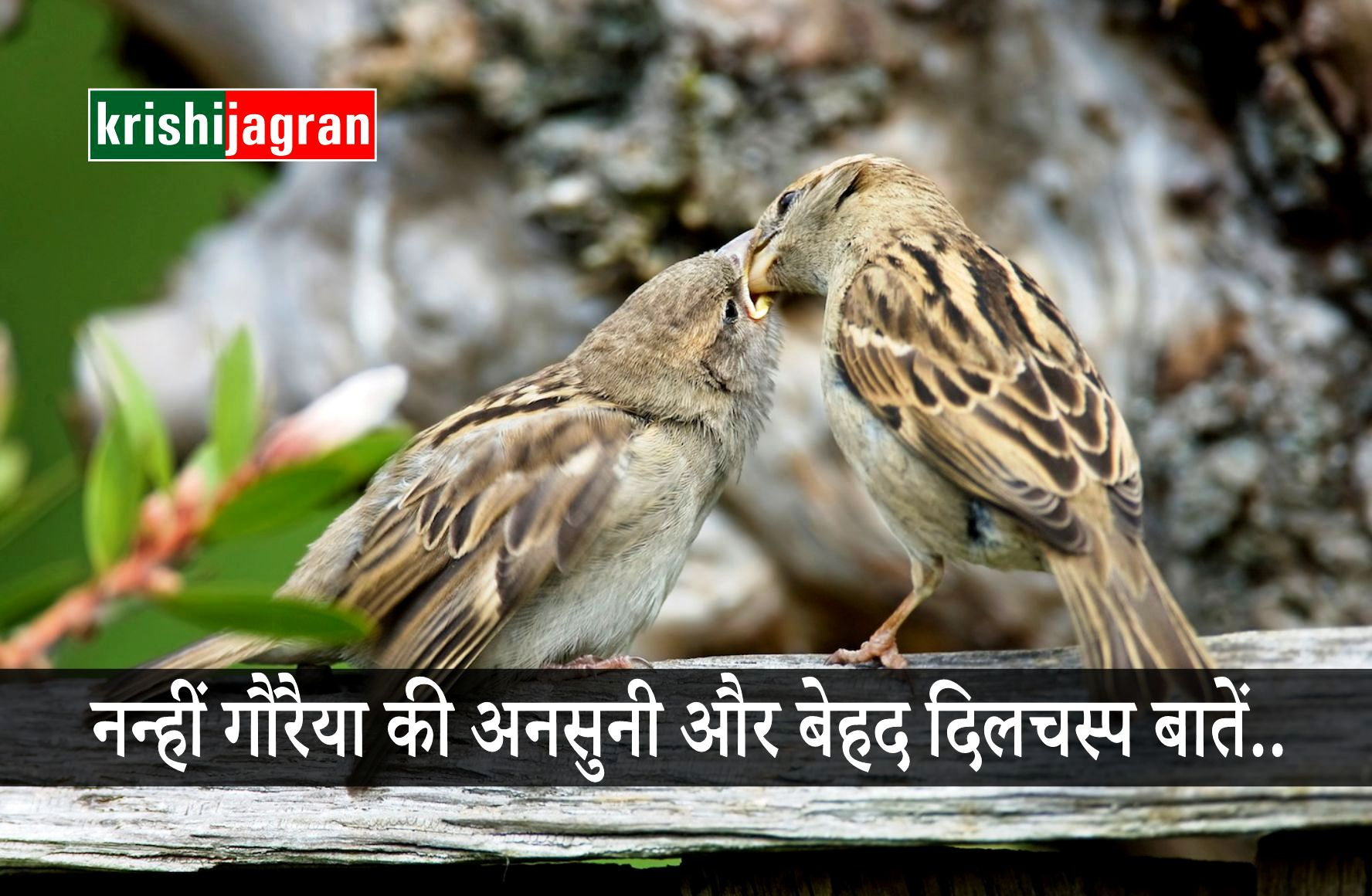 interesting and unknown facts about home sparrow on this worlds sparrow day