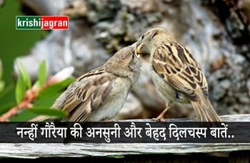 World Sparrow Day: जानें! गौरैया से जुड़ी कुछ अनोखी और दिलचस्प बातें...