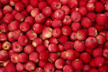 क्यों विलुप्त होते जा रहे हैं लाल सेब, क्या मंडरा रहा है कोई बड़ा संकट?