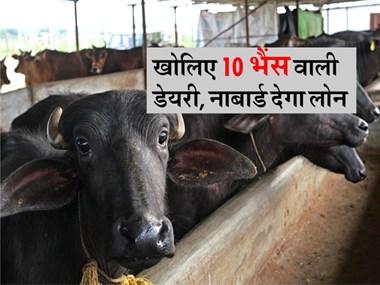 पशुपालन के लिए 7 लाख रुपये तक का लोन और 25% सब्सिडी भी, जानिए आवेदन करने का तरीका
