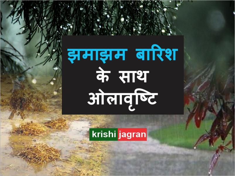 पंजाब, हरियाणा और  राजस्थान समेत इन 5 राज्यों में बारिश की संभावना, किसानों की बढ़ी मुसीबतें