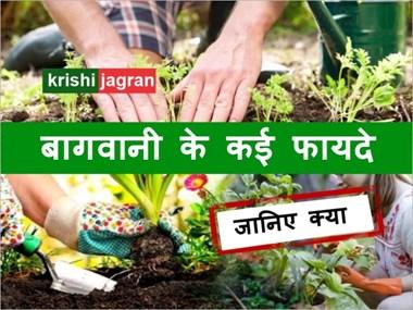 Gardening: बागवानी करना हैं बेहद फायदेमंद,जानिए क्यों?
