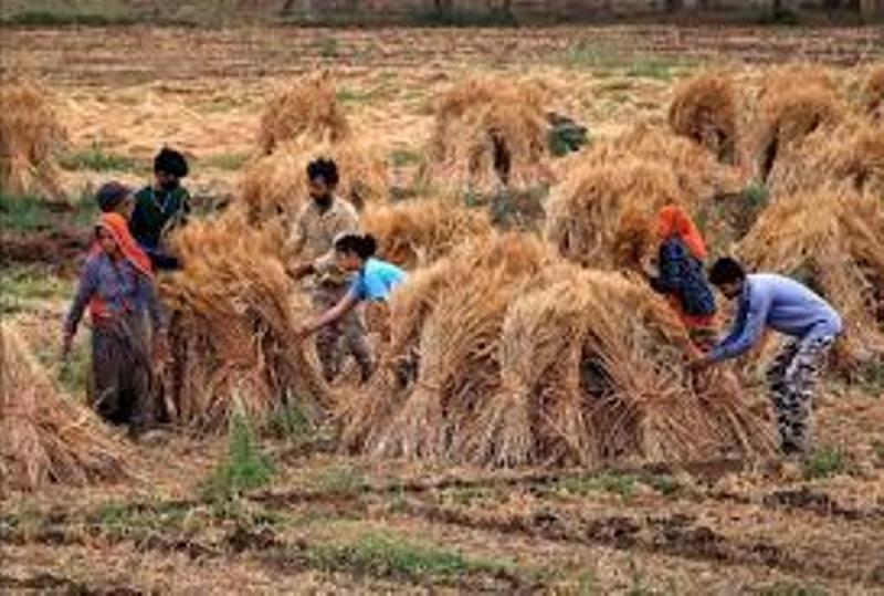 ICAR: किसान फसल कटाई के समय इन उपायों को जरूर अपनाएं
