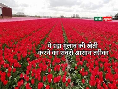 इस तरह से करें गुलाब की खेती, होगा बंपर मुनाफा