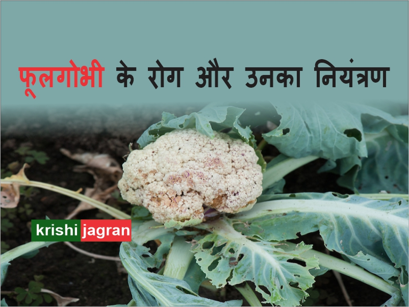 Cauliflower: फूलगोभी के रोग और उनका नियंत्रण