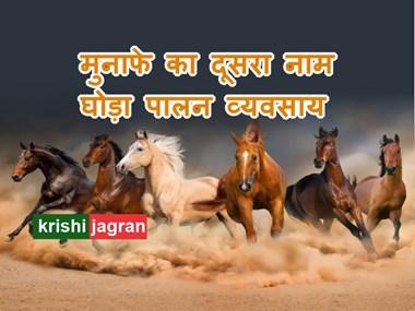 घोड़ा पालन में है कमाई के सुनहरे अवसर, जानिए कैसे