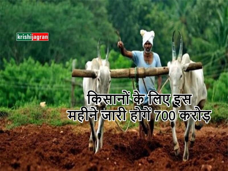 Fasal bima yojana : इस महीने जारी होगें 700 करोड़ रुपए, मिलेगा संकर मक्का और बाजरा बीज मुफ्त