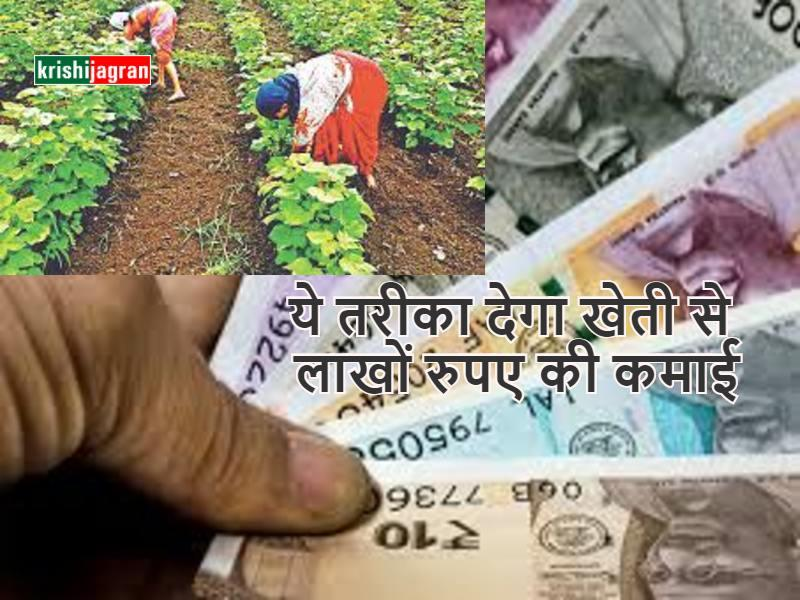 Five stage farming: इस मॉडल के तहत लगाएं 1 एकड़ खेत में 300 किस्म के पौधे, कमाएं लाखों रुपए का मुनाफा