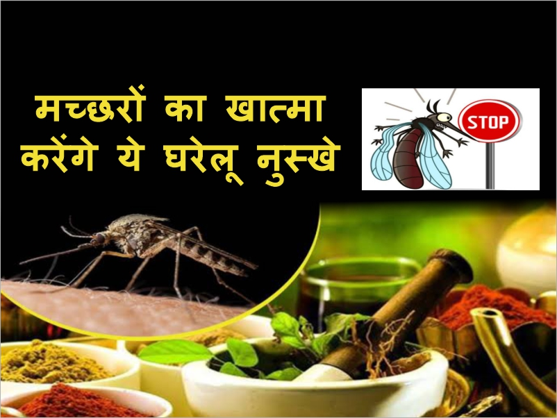 गर्मियों में मच्छरों का खात्मा करेंगे ये घरेलू नुस्खे